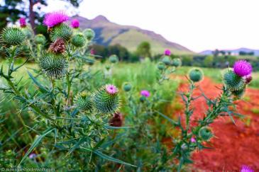 A3 Landscape bulwer mountain.jpg