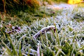 bulwer_moniquevanderwalt_weather_frost_kwazulunatal (3)-1.jpg