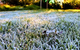 bulwer_moniquevanderwalt_weather_frost_kwazulunatal (6)-1.jpg