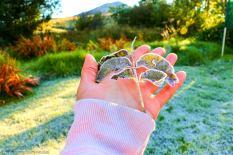 bulwer_moniquevanderwalt_weather_frost_kwazulunatal (7)-1.jpg
