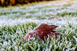 bulwer_moniquevanderwalt_weather_frost_kwazulunatal (8)-1.jpg