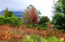 cottageimvana_bulwer_southerndrakensberg_kwazulunatal.jpg