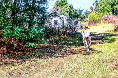 bulwer_cottageimvana_airbnb_kwazulunatal (5)
