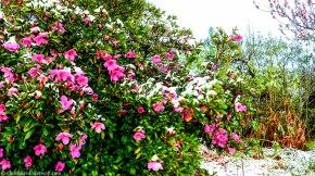 bulwer_cottageimvana_snow_kwazulunatal (2)-1.jpg