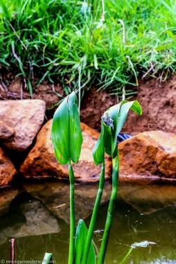 Cottageimvana_bulwer_drakensberg-southafrica.jpg