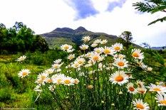 cottageimvana_bulwer_kwazulunatal_airbnb_drakensberg (2).jpg