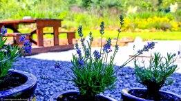 cottageImvana_airbnb_drakensberg_bulwer_kzn_kwazulunatal_southafrica (15).jpg