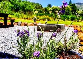 cottageImvana_airbnb_drakensberg_bulwer_kzn_kwazulunatal_southafrica (27).jpg