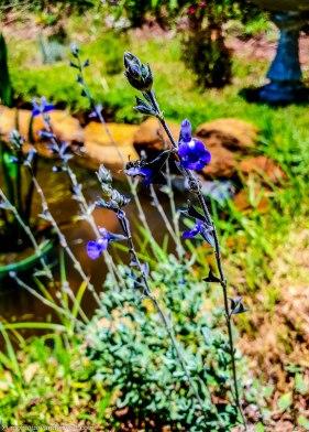 cottageImvana_airbnb_drakensberg_bulwer_kzn_kwazulunatal_southafrica (31).jpg