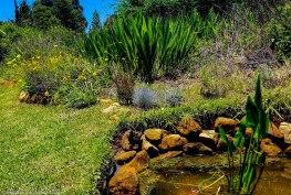 cottageImvana_airbnb_drakensberg_bulwer_kzn_kwazulunatal_southafrica (33).jpg