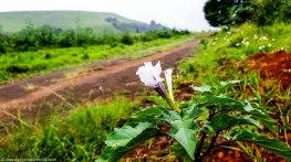 cottageImvana_airbnb_drakensberg_bulwer_kzn_kwazulunatal_southafrica (51)-2.jpg