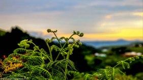 cottageimvana_bulwer_kwazulunatal_drakensberg_southafrica (3).jpg