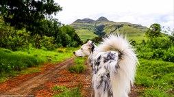 cottageimvana_bulwer_kwazulunatal_drakensberg_southafrica (7).jpg