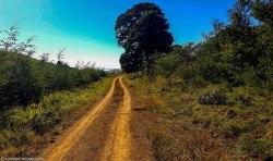 cottageimvana_bulwer_kwazulunatal_drakensberg_SA (3).jpg
