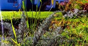 cottageimvana_bulwer_kwazulunatal_drakensberg_SA (4).jpg
